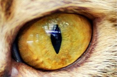mike vom mars mike-vom-mars.com online-quiz online-trivia online-test quizfragen quiz trivia spiel teste dein wissen Welches Tier verbirgt sich hinter diesen Schlitzaugen? Katze Löwe Leopard