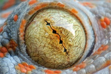 mike vom mars mike-vom-mars.com online-quiz online-trivia online-test quizfragen quiz trivia spiel teste dein wissen Wer guckt hier? Eidechse Schlange Gecko
