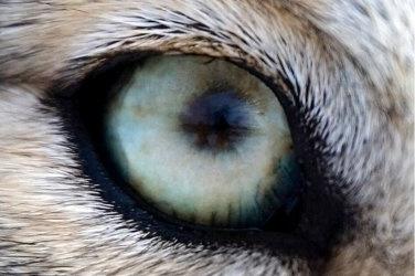 mike vom mars mike-vom-mars.com online-quiz online-trivia online-test quizfragen quiz trivia spiel teste dein wissen Zu welchem Tier gehören die Augen, die in diesem Pelz stecken? Wolf Hund Schaf