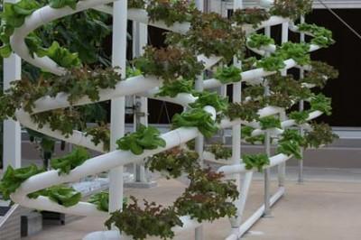 Hydrokultur Urban Farming Sky Farming