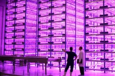 Indoor Farm mit LEDs