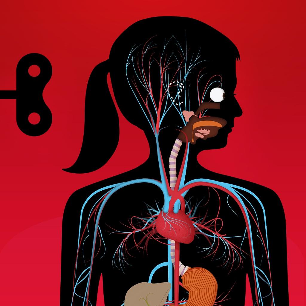 Erstaunliche Zahlen und Fakten über den menschlichen Körper