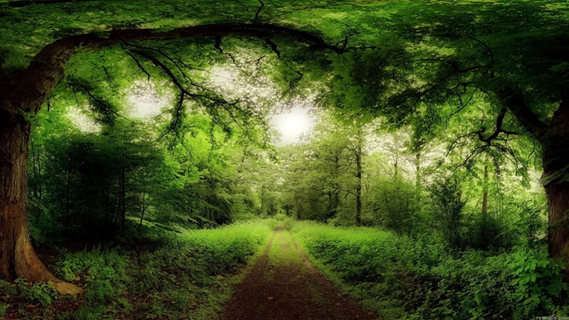 The most beautiful forest wallpapers download - A live nature wallpaper ...