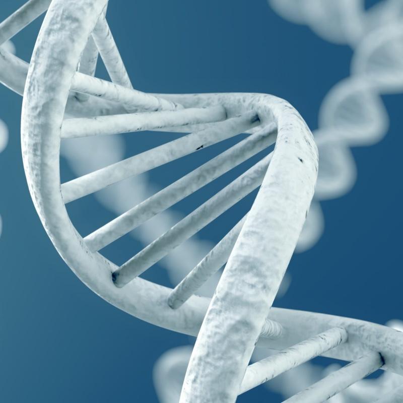 Epigenetik Genom DNA-Code Hunger Krieg Methylgruppen Methylierungsmuster Tumore Epigenom Lebenswandel Umwelt Stress Ernaehrung