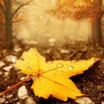 autumn wallpaper desktop herbst hintergrund autumn mood herbststimmung hd wallpapers hintergrundbilder schönsten most beautiful scenic nature mike vom mars blog