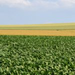 monokultur insektensterben flachenfrass flachenverbrauch siedlungsbau biotope ackerflachen flachenvernichtung mike vom mars blog